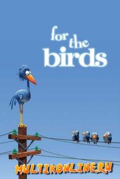 Мультфильм про Птиц на Проводе